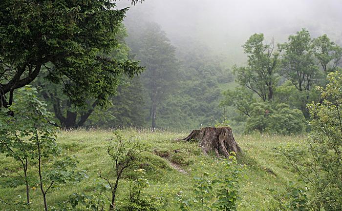 Naturpark Karwendel, Tirol, Juni 2009 Kennen Sie diesen kurzen Moment vor der Dämmerung, wenn alles plötzlich still wird? Die Vögel flüstern leise, der Wind streift beinahe geräuschlos übers Gras. Als ob die Natur ganz kurz den Atem anhält. In so einem Moment ist diese Aufnahme entstanden. Ich versuchte auch meinen Atem zu halten und leise zu sein. Ich hoffe, dass es mir gelungen diese märchenhafte Stimmung in das Bild aufzunehmen.